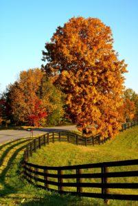 Fall In Bardstown, Kentucky