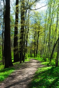 Spring forest hiking in Bernheim Arboretum