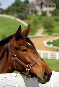 Horse farm tours in Bardstown